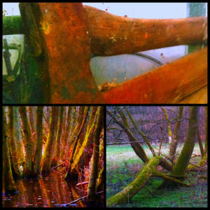 Forestry Triptyc