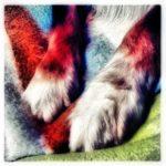 Buddy's Feet