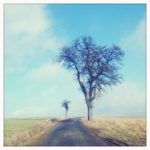 Birnbaum Amerikastraße
