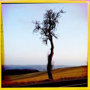 Fifth tree