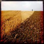 Das spitze Feldstück